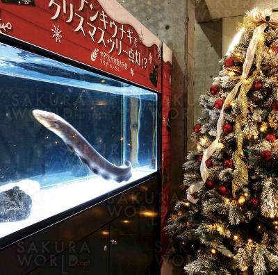 【テーマ水槽】デンキウナギでクリスマスツリー点灯!?