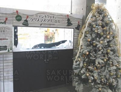 【アクア・トトぎふのクリスマス】