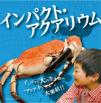 特別企画展「インパクト・アクアリウ ム〜衝撃の生き物たち〜」