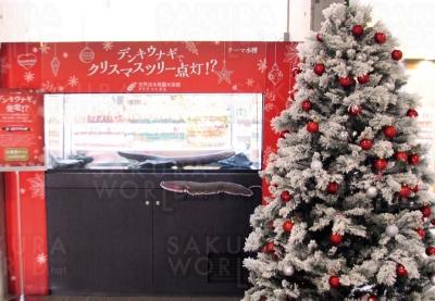テーマ水槽 「デンキウナギでクリスマスツリー点灯!?」