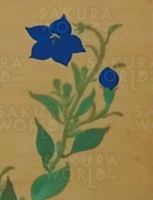 原三溪「桔梗図」(部分) 歴史博物館蔵