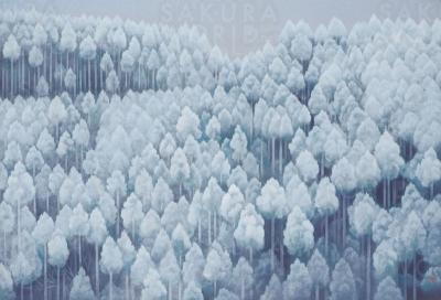 「川端康成と東山魁夷 美と文学の森」