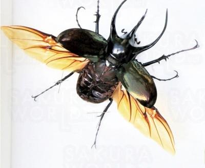 昆虫展~世界のカブト・クワガタ、日本のチョウ~