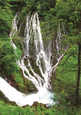 乗鞍山麓五色ヶ原の森で大自然の懐に抱かれてみませんか?