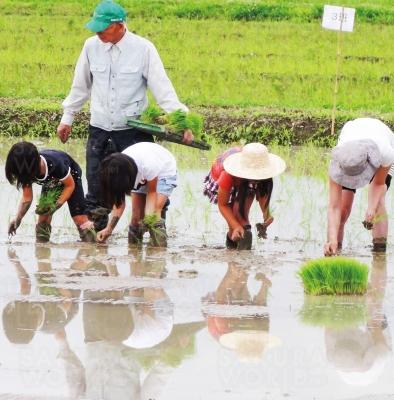春は泥んこになっての 「田植え」、秋は実った米を 収穫する「稲刈り」を体験
