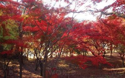 岐阜県 百年公園