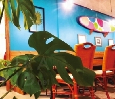 大きなサーフボードが壁に飾 られ、広々とした店内。