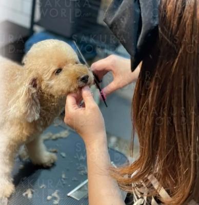 Dog Salon Noir